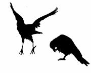 Oiseau Fantastique Qui Vole Dessin Galerie Creation